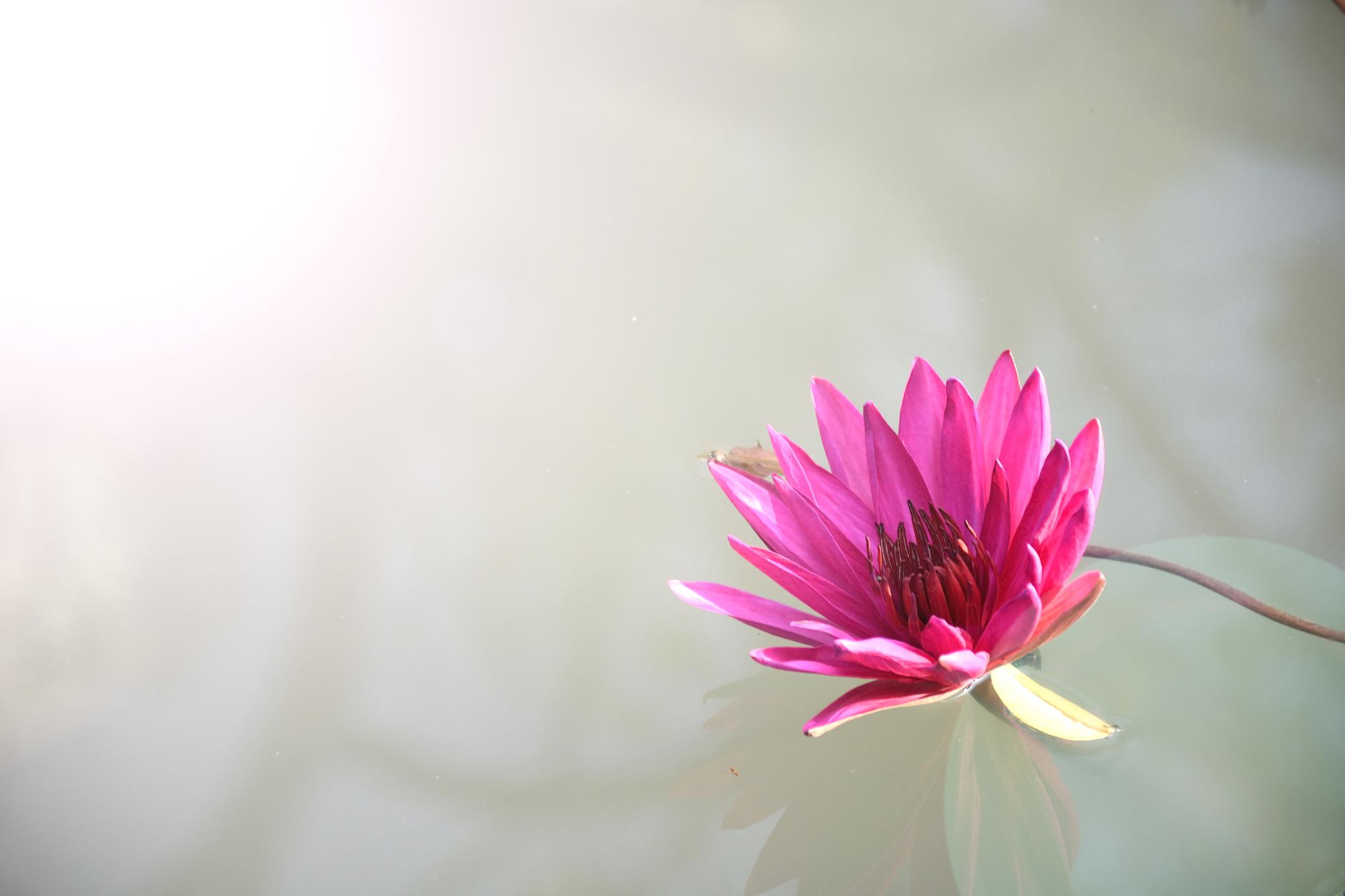 Laissons-nous fleurir